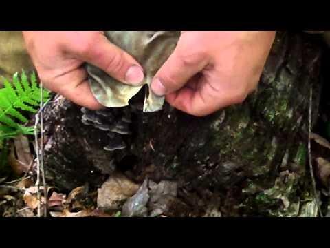 Making a stone tomahawk, primitive weapon making