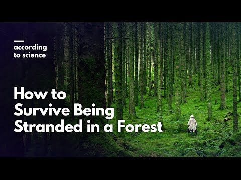 How to Survive Being Lost in the Forest, According to Science