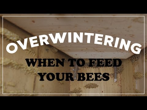 When & How to Feed Your Bees