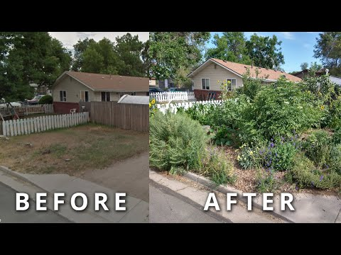 Create Your Own FOOD FOREST In 3 Steps [How To Transform Any Piece of Land Quickly]