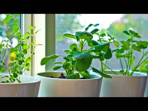 10 Herbs You Can Grow Indoors on Kitchen Counter