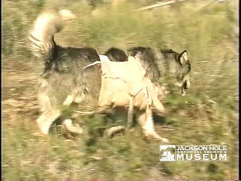 Gifts of the Mountains : Packing Tools on Dogs : Dog Travois