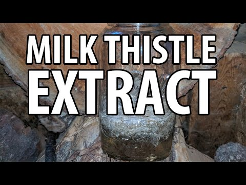 How to Make Milk Thistle Extract