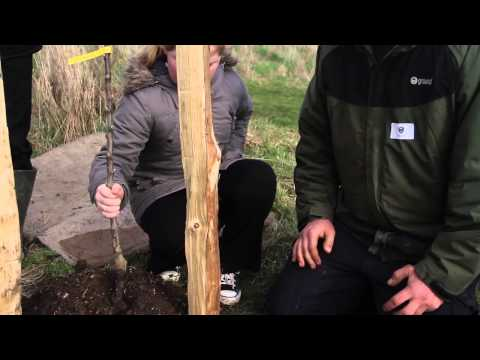 How to plant an apple tree REALLY well