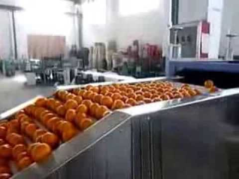 Fruit and vegetable washing waxing and sorting machine