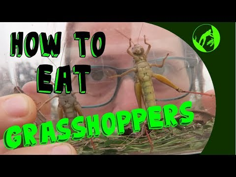 Eating Grasshopper for Survival (and because they are tasty)