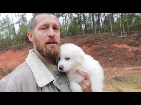 Training Our Livestock Guardian Dog - Protector of Our Nigerian Dwarf Goats