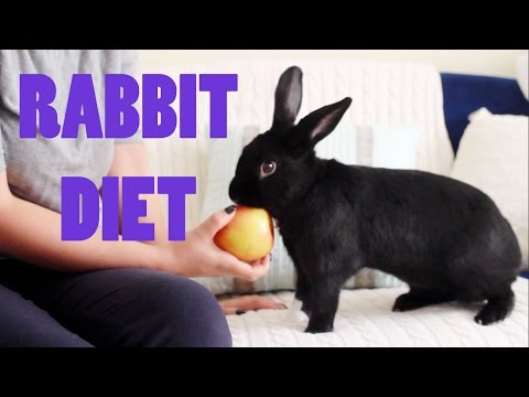 What Can Rabbits Eat?   Lennon's Diet
