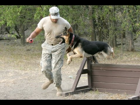 9 Guaranteed Ways to Train Your Dog to Attack on Command