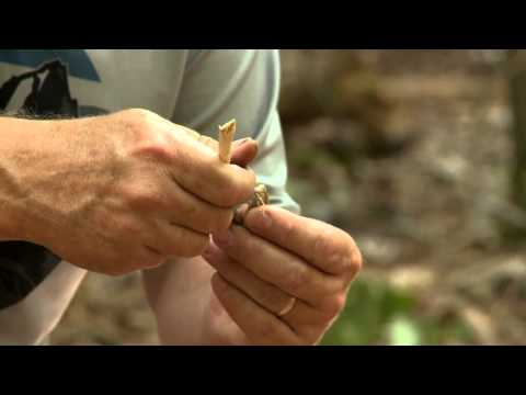 Total Outdoorsman: How to Cook and Eat Grasshoppers