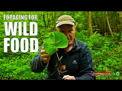 Foraging for Wild Food