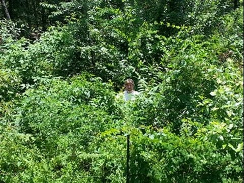 The Permaculture Food Forest - Plant Once- Harvest for a Lifetime. How It Works.