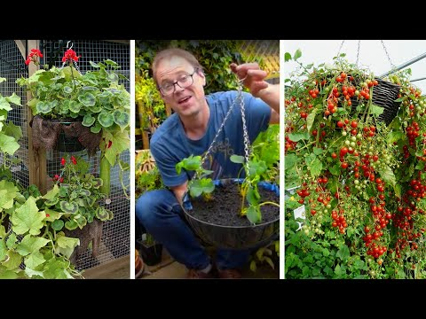 How to Grow Fruit & Vegetables in Hanging Baskets