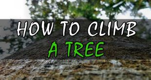 how to climb a tree logo