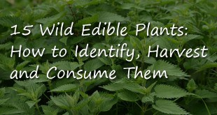Wild Edible Plants Logo