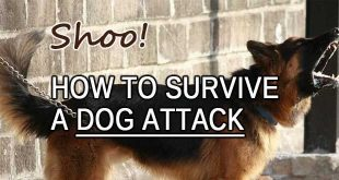 dog attack logo
