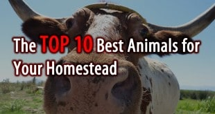 top 10 animals logo
