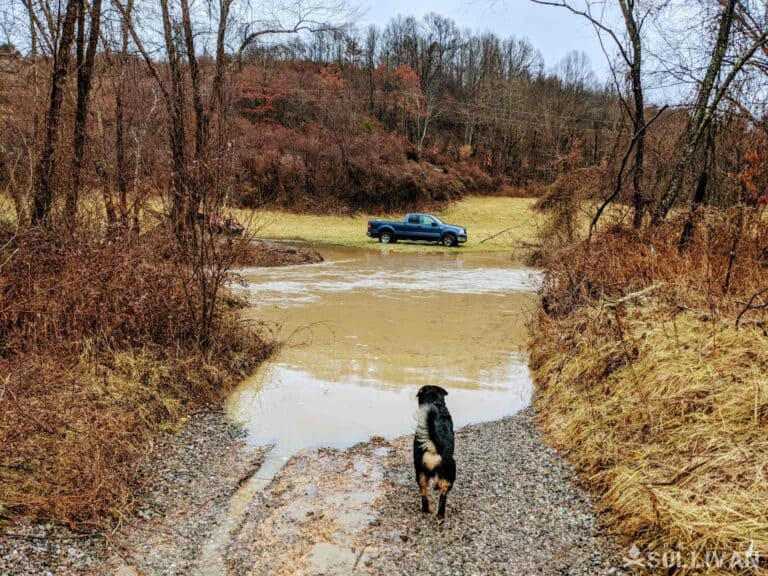 dog looking at pick-up truck across flooded road