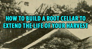 how to make a root cellar logo