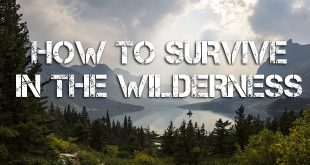 survive in the wilderness logo