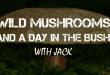 wild mushrooms logo