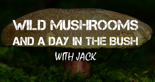 wild mushrooms logo