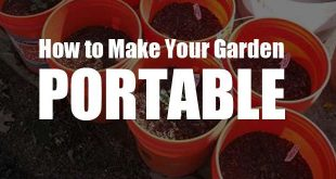 portable garden featured image