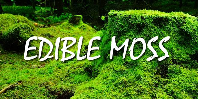 Edible Moss Survival Sullivan