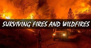 surviving wildfires logo