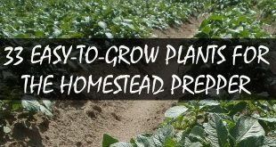 plants for homestead prepper logo