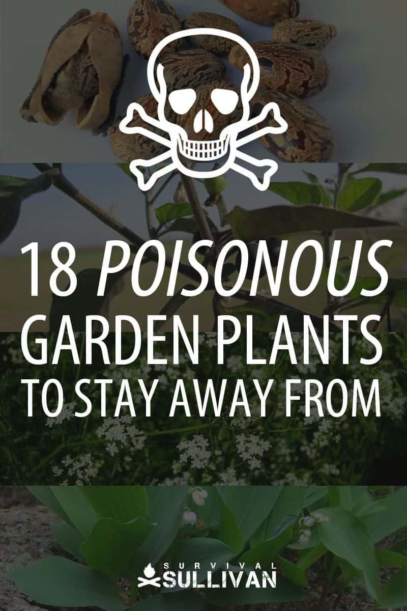 poisonous garden plants pinterest