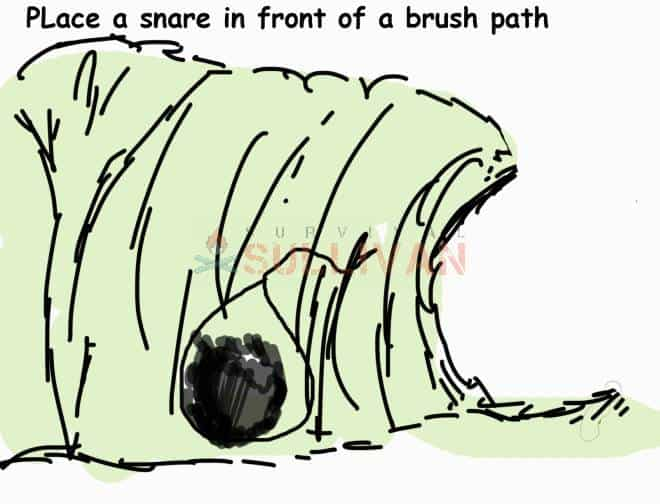 snare over a brush path