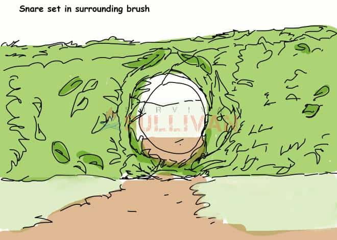 sorrounding bush snare