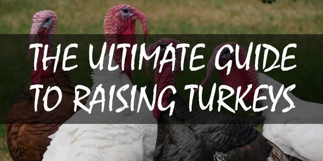 turkeys logo