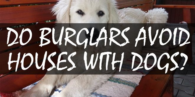 burglars avoiding dogs featured image