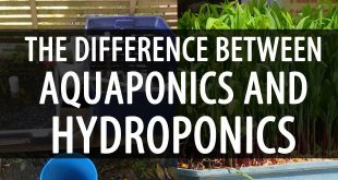 difference between aquaponics and hydrophonics
