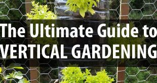 guide to vertical gardening featured image