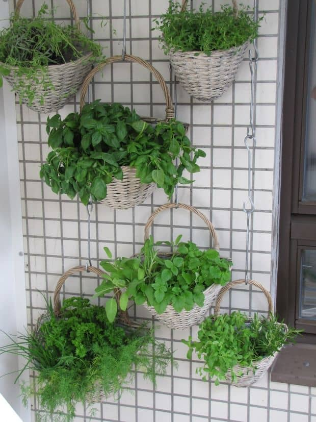 herbs in vertical garden on balcony