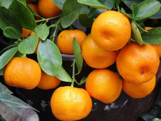 mandaring oranges
