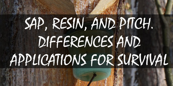 sap resin pitch differences applications featured image
