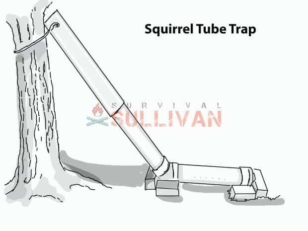 How To Make A Squirrel Tube Trap 4 Ways Survival Sullivan