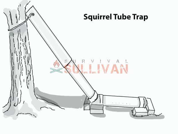 squirrel tube trap