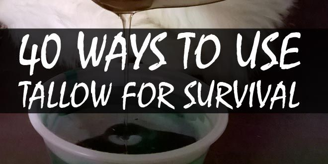 survival uses for tallow