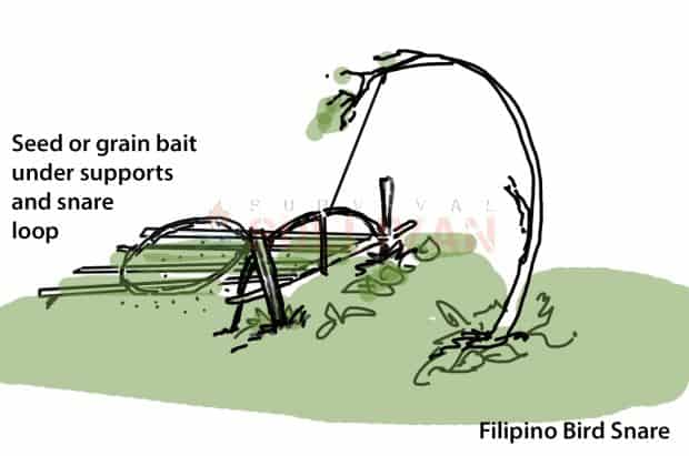 Filipino Bird Snare