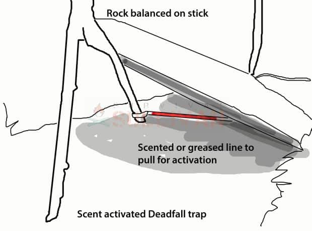 scent activated deadfall trap