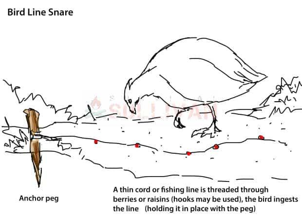 bird line snare