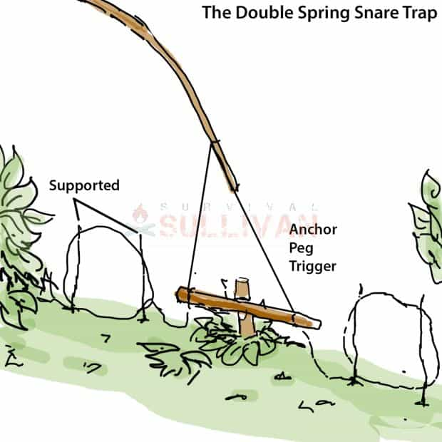 double snare spring trap