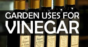 garden uses for vinegar