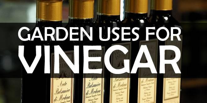 garden uses for vinegar