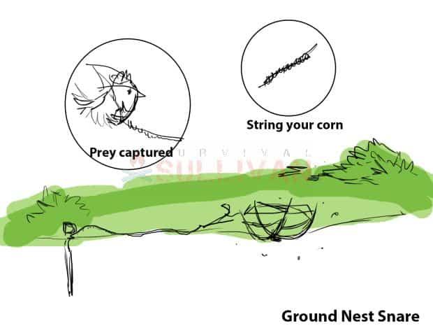 ground nest snare